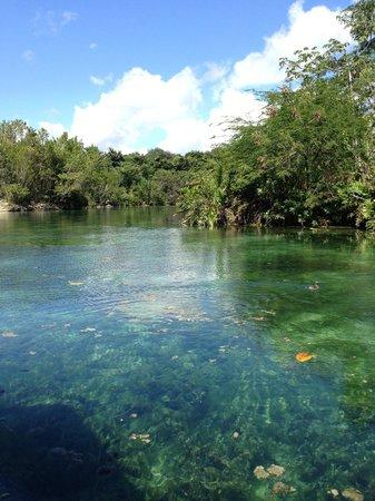 Banyan Tree Mayakoba : Ballade en bateau dans la mangrove