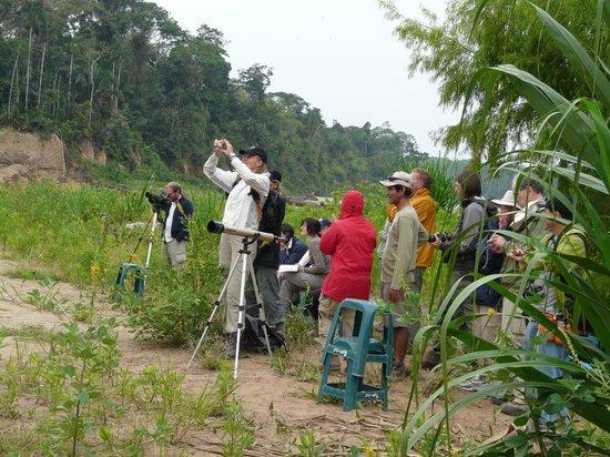 Madre de Dios Region, Peru: Avistamiento de Aves en la Reserva Nacional de Tambopata