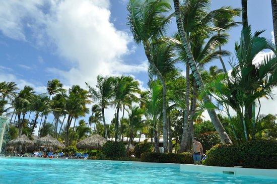 Meliá Caribe Tropical: Matas de cocos en la playa