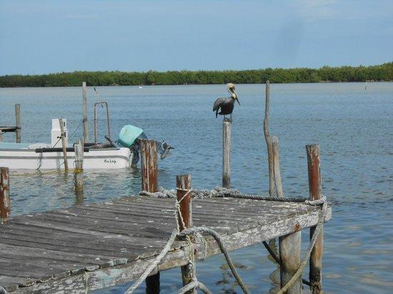 Hotel Villa de Pescadores: Pelicans