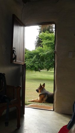 Chrislin African Lodge: Jack is guarding our house :-)