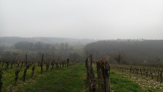 French Wine Adventures - Day Tours: vineyard