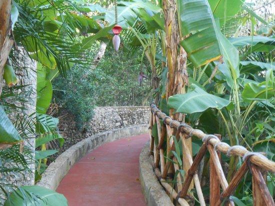 Casa Hamaca Guesthouse: Garden Tour