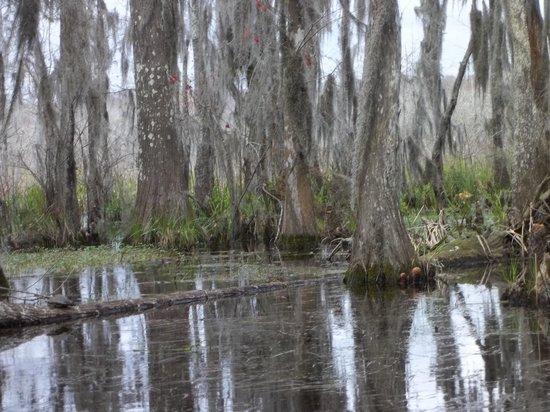 Cajun Encounters: swamp