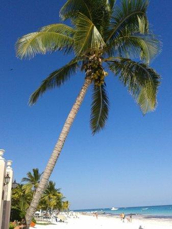 Playa Esperanza: playa