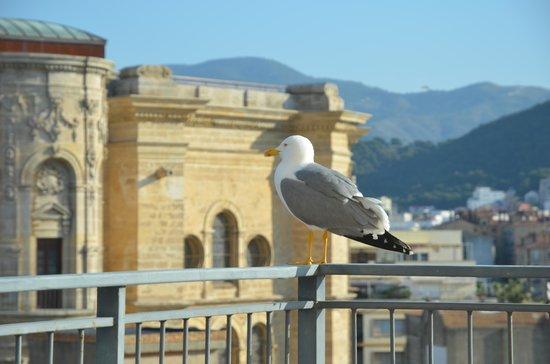 AC Hotel Malaga Palacio: hoek kamer cathedral view 2