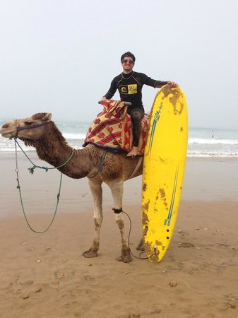 Cli Surf Morocco: Camel