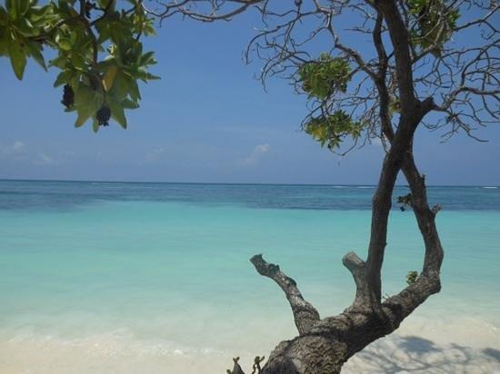 Kuredu Island Resort & Spa : beach view