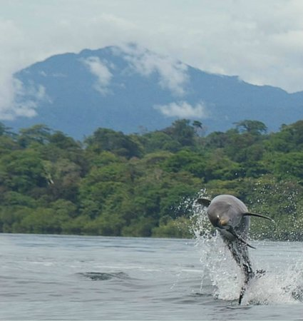 ATEC - Talamancan Association of Ecotourism and Conservation Day Tours: In Punta Mona