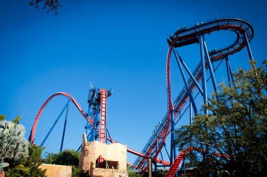 Montanha Russa Sheikra Picture Of Busch Gardens Tampa