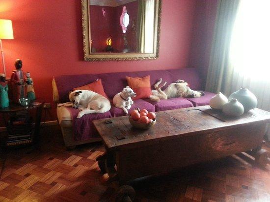 Casa Moro: Living con decoración especial , y perros y gatos