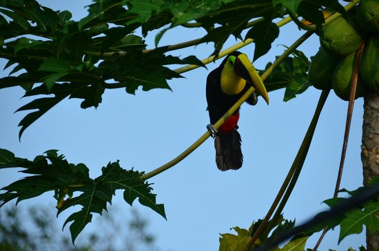 TikiVillas Rainforest Lodge & Spa: Toucan back for more