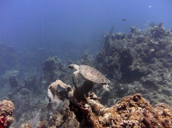 Cane Bay Dive Shop