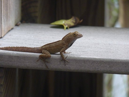 Virgin Islands Campground: These little guys were everywhere - and so cute!