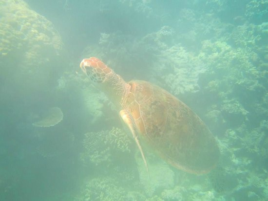 Reef Experience : Lovely turtle