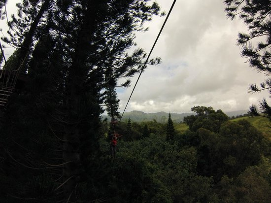 Just Live! Zipline Tours : In the trees