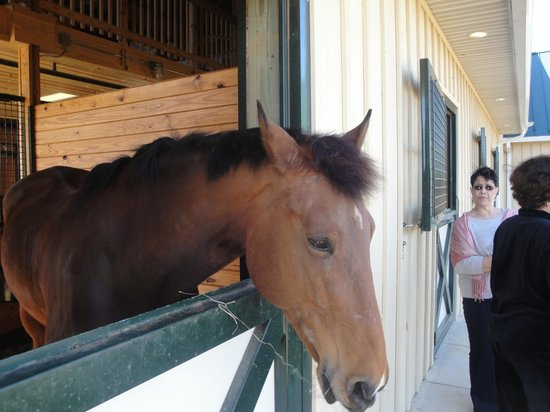 Salamander Resort & Spa: Equestrian Center