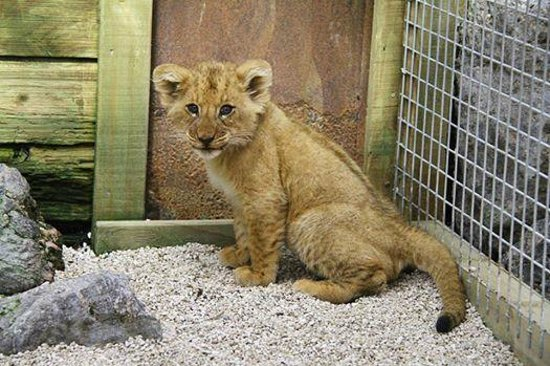 Paradise Valley Springs Wildlife Park: Gorgeous cub