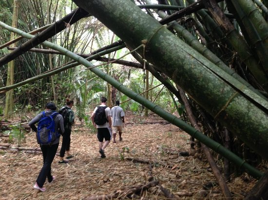 Barebones Tours, Day and Night Tours: Hiking through the jungle