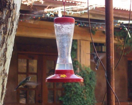 El Portal Sedona Hotel: hummingbird watching in the courtyard