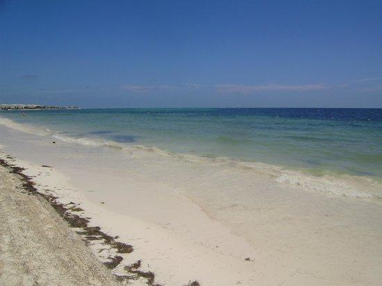 Ocean Coral & Turquesa : Beach