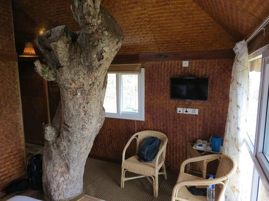 Kaivalyam Retreat : Tree in the room!