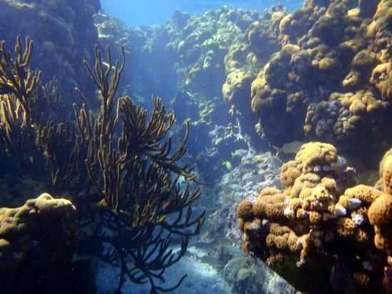 Tours en Islas del Rosario: Isla Grande - Snorkeling from the shore