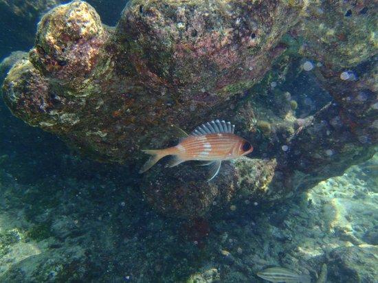 Tours en Islas del Rosario: Snorkeling próximo ao Oceanario