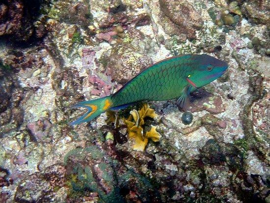 Tours en Islas del Rosario: Isla Grande - Snorkeling