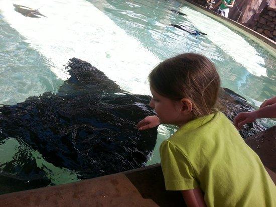 SeaWorld San Diego : Feeding Bat Rays