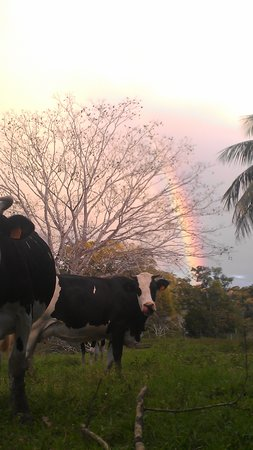 Cool M Farm : Rainbow seemed to rest on our pastures