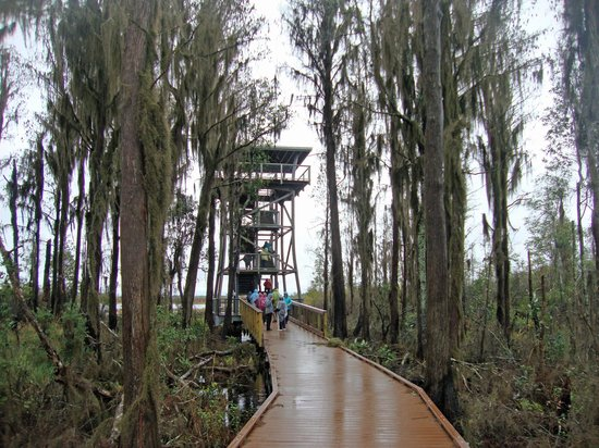 Okefenokee National Wildlife Refuge: Chesser Island Boardwalk and Owls Roost Tower - Okefenokee