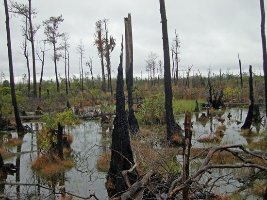 Okefenokee National Wildlife Refuge: Chesser Island Boardwalk - Okefenokee