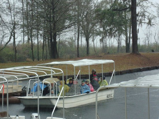 Okefenokee National Wildlife Refuge: Swamp Boat Tour in the Cold Rain - Okefenokee