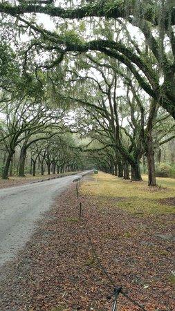 Wormsloe Historic Site : 1 mile long oak driveway