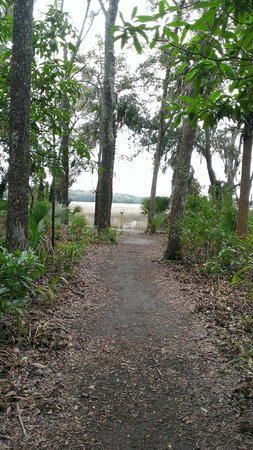 Wormsloe Historic Site: Trails to the marsh