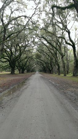 Wormsloe Historic Site: 1 mile long oak driveway