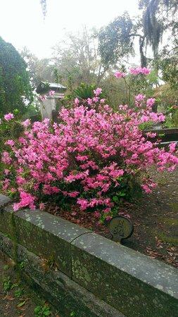 Bonaventure Cemetery : Bonaventure
