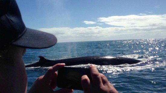 New Zealand Diving: whale photo near little barrier island