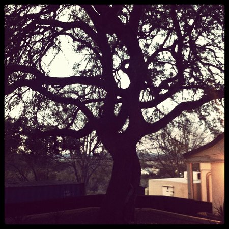 Hotel Alsace & Spa Resort : Giant oak trees on property