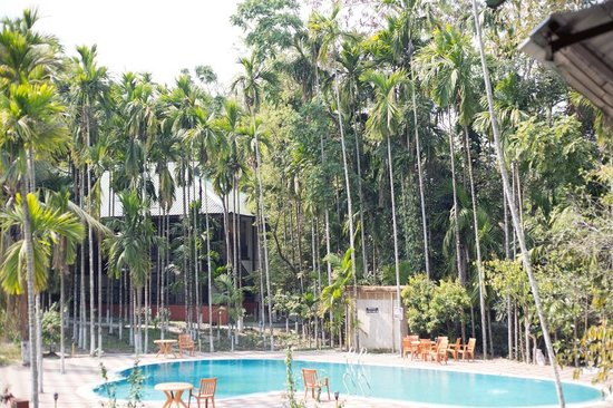 Infinity Resort Kaziranga : View as seen from my room with pool and dining between the trees