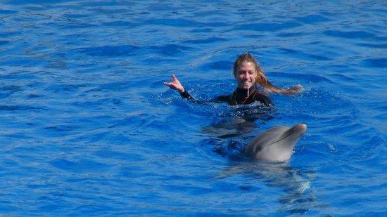 Oceanografic: spectacle dauphin