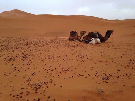Merzouga, Maroko: desert