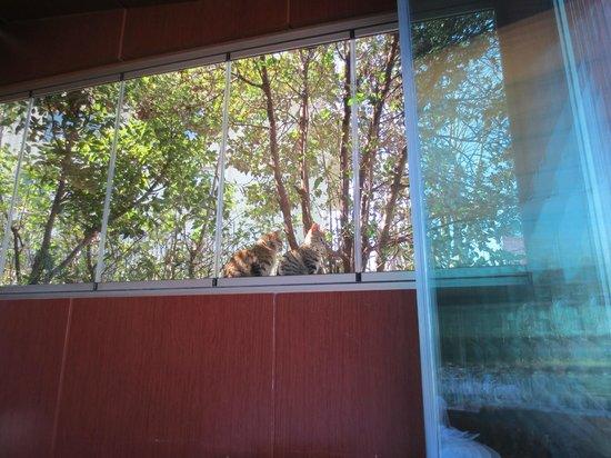 Mer Balik: cats view