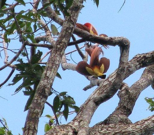Kri Eco Resort: райские птицы