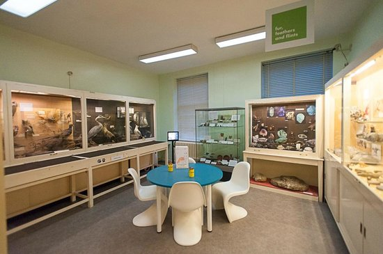 Tunbridge Wells Museum & Art Gallery: Fur, Feathers & Flint room