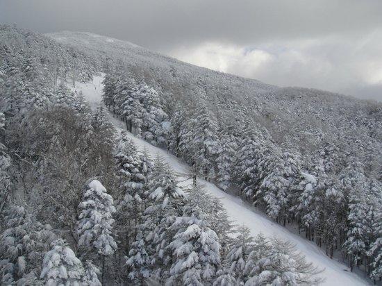 Pilatus Tateshina Ski Resort: 樹氷コース