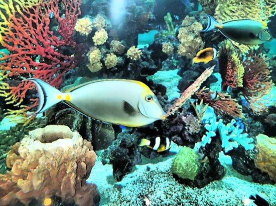 Phuket Graceland Resort & Spa: The lobby Aquarium