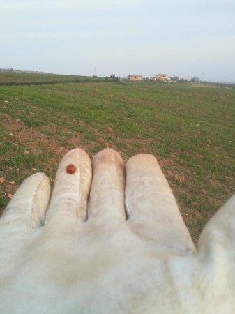 Agriturismo La Svolta: coccinella