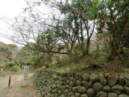 Kamakura Hiking Trails : 大仏ハイキングコース